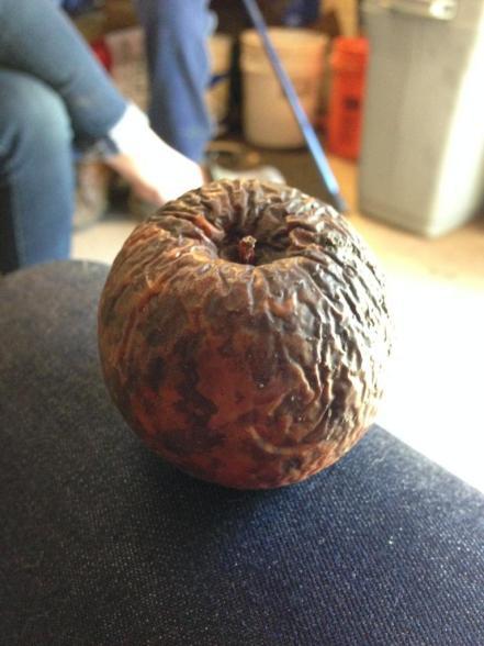 craven apple