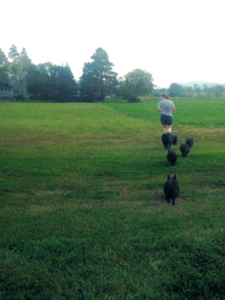 eliza herding pigs