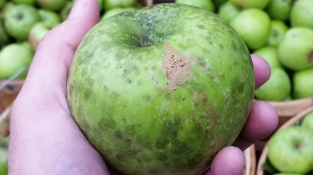 Eat Ugly Apples Unconventional Stories From An Apple Farmer