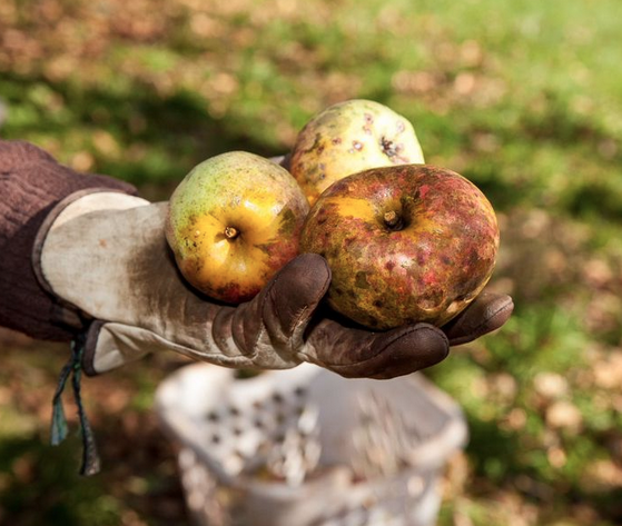 My Munchable Musings: What's Cooking? An Ugly Apple